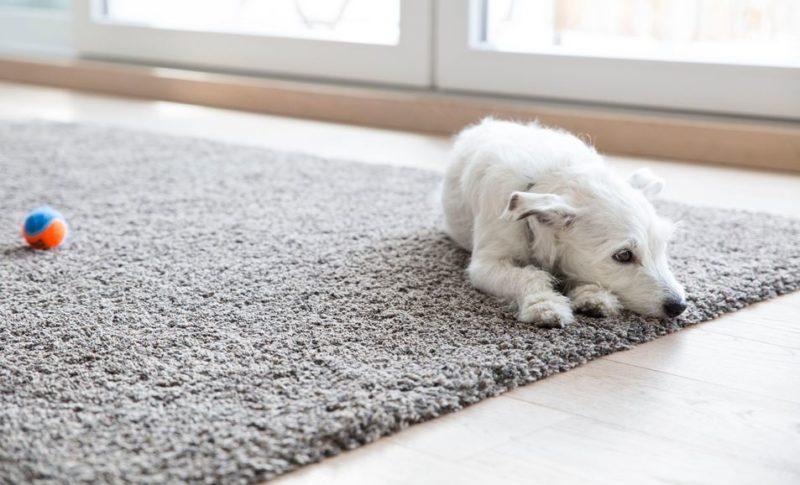 10 روش برای افزایش عمر فرش